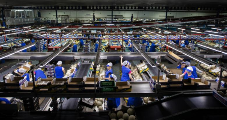 Potencial humano manufacturación